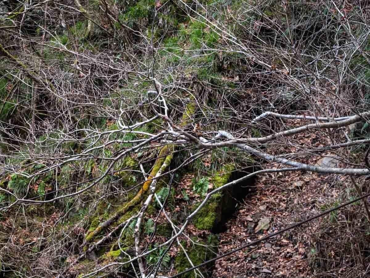 森の中の枝