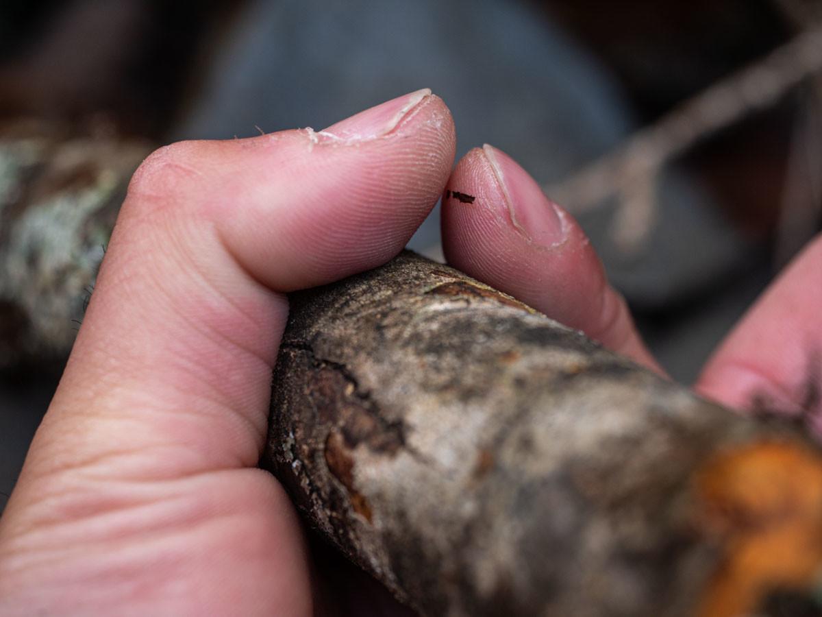 薪の太さを指で測る