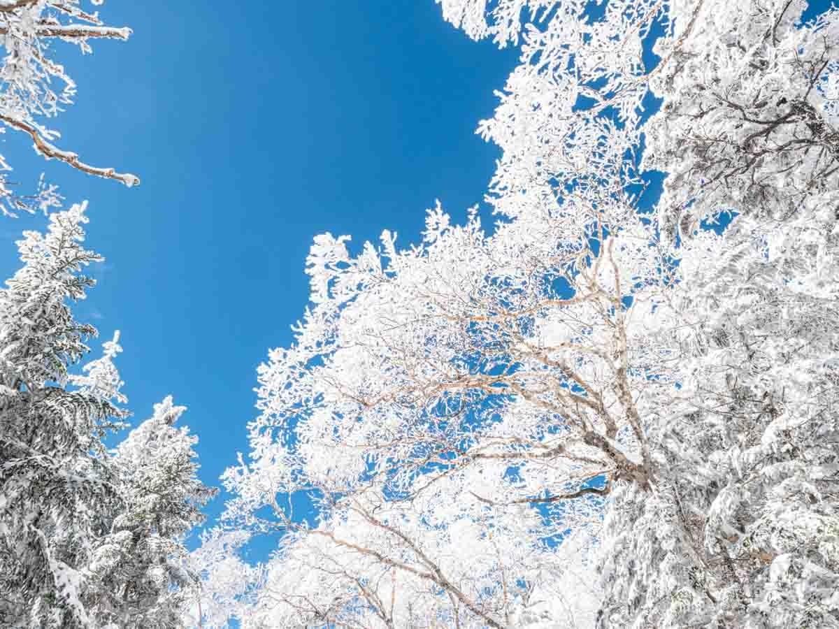 樹氷と青空