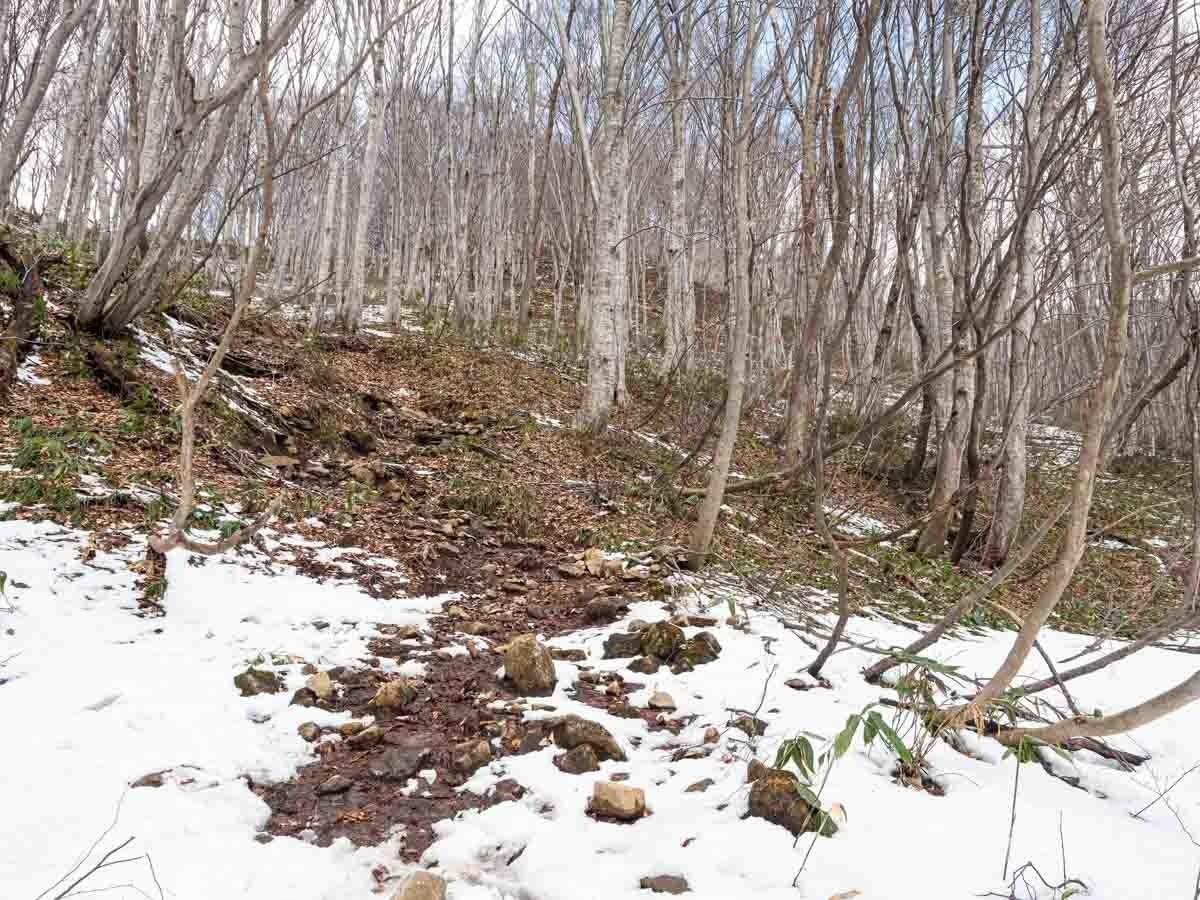 3月の白毛門登山道