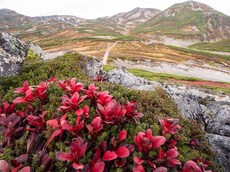 大雪山とウラシマツツジ