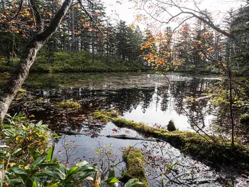 ニペソツ山の沼