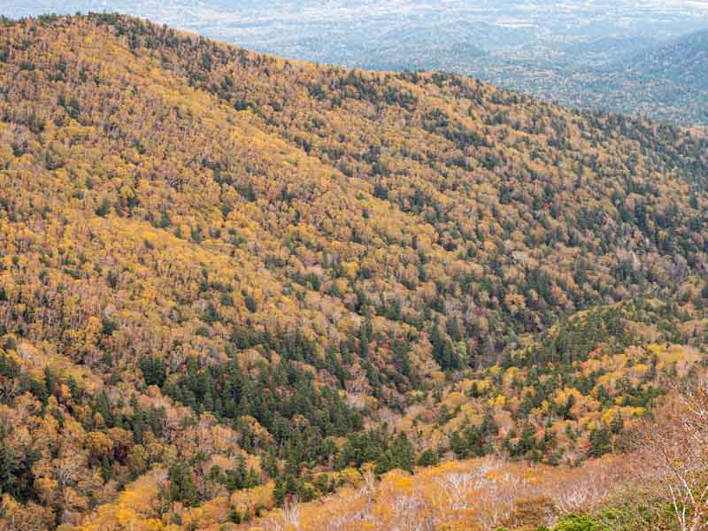 ニペソツ山の紅葉