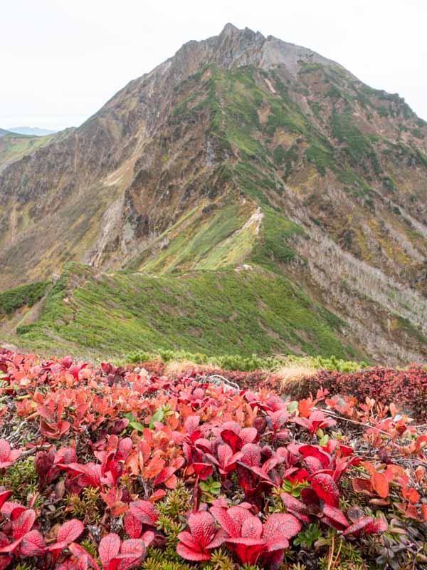 ニペソツ山と紅葉