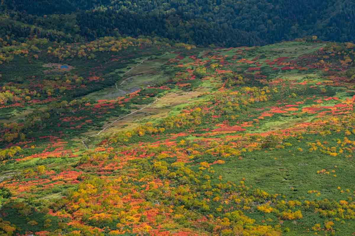 高原温泉 紅葉