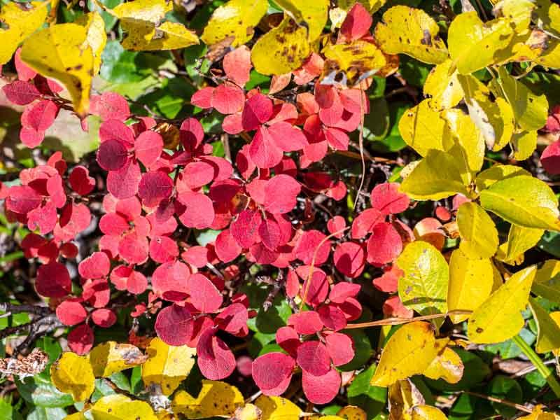 赤と黄色い紅葉
